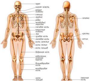 Какие чудеса хранит человеческое тело